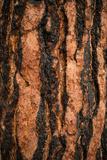 Oregon Pine I