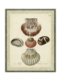 Bookplate Shells III