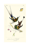 Lemaire Hummingbirds IV
