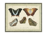 Bookplate Butterflies Trio III