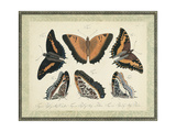 Bookplate Butterflies Trio I