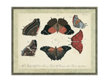 Bookplate Butterflies Trio II