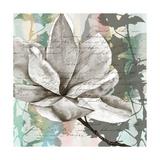 Pastel Magnolias II