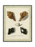 Bookplate Shells I
