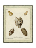 Bookplate Shells II