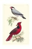 Lemaire Birds I