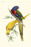 Lemaire Parrots IV