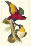 Lemaire Parrots I
