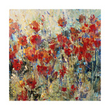 Red Poppy Field II