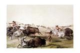 Chasse au bison chez les Indiens d'Amérique du Nord