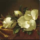 Magnolia Still Life II (detail)