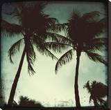 Miami Vintage II