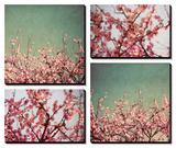 Fleurs de cerisier Tableau multi toiles par Susan Bryant