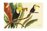 Tropical Toucans II