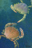 Two Swimming Crabs