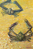 Two Spider Crabs