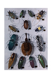 Collection of Various Beetles