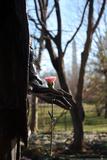 Flower in Statue's Hand Washington DC