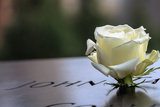White Rose at September 11 Memorial