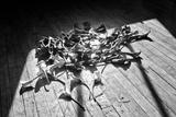 Calla Lillies on Wood Floor B/W