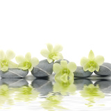 Row of Stones and Orchid with Reflection
