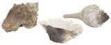 Milton Seashells - Set of 3