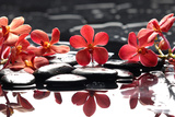 Branch Red Orchid with Zen Stones Reflection