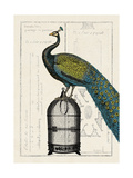 Peacock Birdcage II Reproduction d'art par Hugo Wild