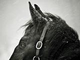 Snow Daze IV Crop Papier Photo par Lisa Cueman