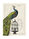 Peacock Birdcage I Reproduction d'art par Hugo Wild