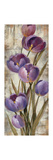 Royal Purple Tulips II Crop