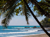 Costa Rica Beach with Tropical Palm Tree Photo Poster Print
