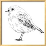 Hand-Drawn Robin