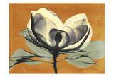 Warm Magnolia 1