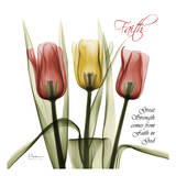 Faith Tulips