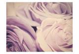 Purple Vintage Roses