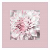 Dahlia Pinks 5