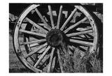 Bodi Wheel