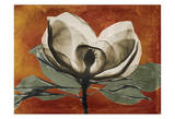 Magnolia Rust 1
