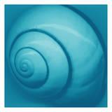 Snail Shell Blue