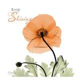 Keep Shining Iceland Poppy