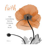 Iceland Poppy Faith