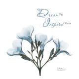 Oleander Dream