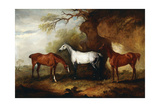 Three Hunters Belonging to Robert Myddelton-Biddulph