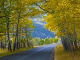 Road Thru Autumn Aspen Grove  Rocky Mountain National Park  Colorado USA