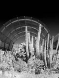 Phoenix Botanical Gardens  Arizona USA