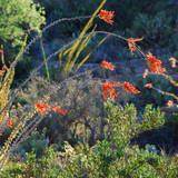 Arizona Desert Plants USA