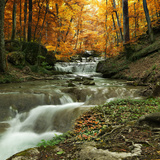 Autumn Creek Woods with Yellow Trees Foliage and Rocks in Forest Mountain