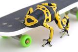 Frog on a Skateboard