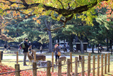 Nara is a Major Tourism Destination